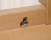 Etabli en hêtre massif équipé d'une presse de menuisier, plateau de 2,10 m